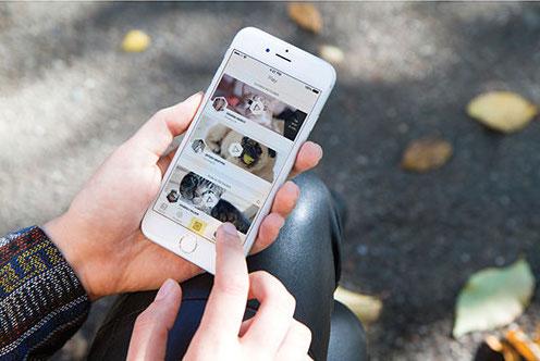 petcube interactive wifi camera.jpg