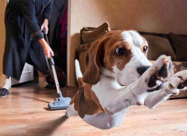 pet vacuum cleaners.jpg