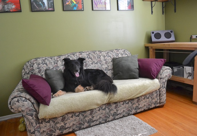 home office, dog on couch-small.jpg