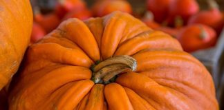 pumpkin spice recipes for fall 2016