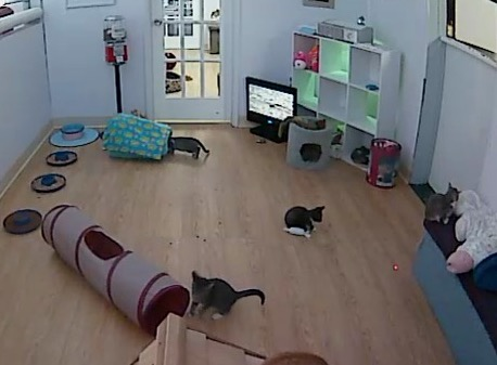 petcube-play-network-of-cams