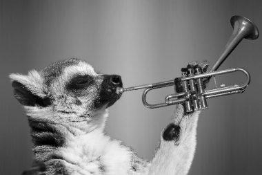 Brass Instruments trumpet