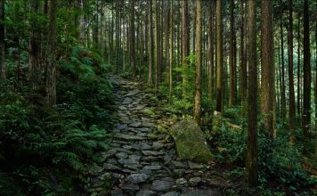 A photo of a forest walk