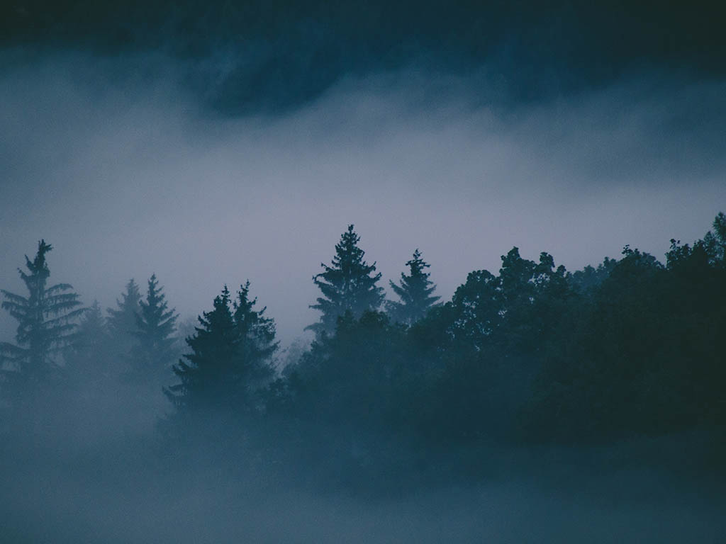 Photo of trees in fog