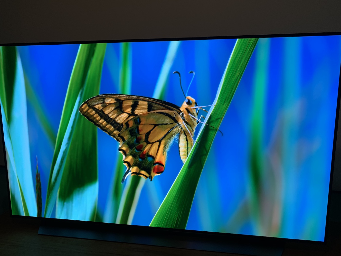 Showcasing LG C9 OLED 4K TV's Dolby Vision Technology - screen is showing a butterfly