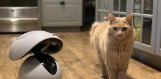 Dogness Smart Pet Robot Review