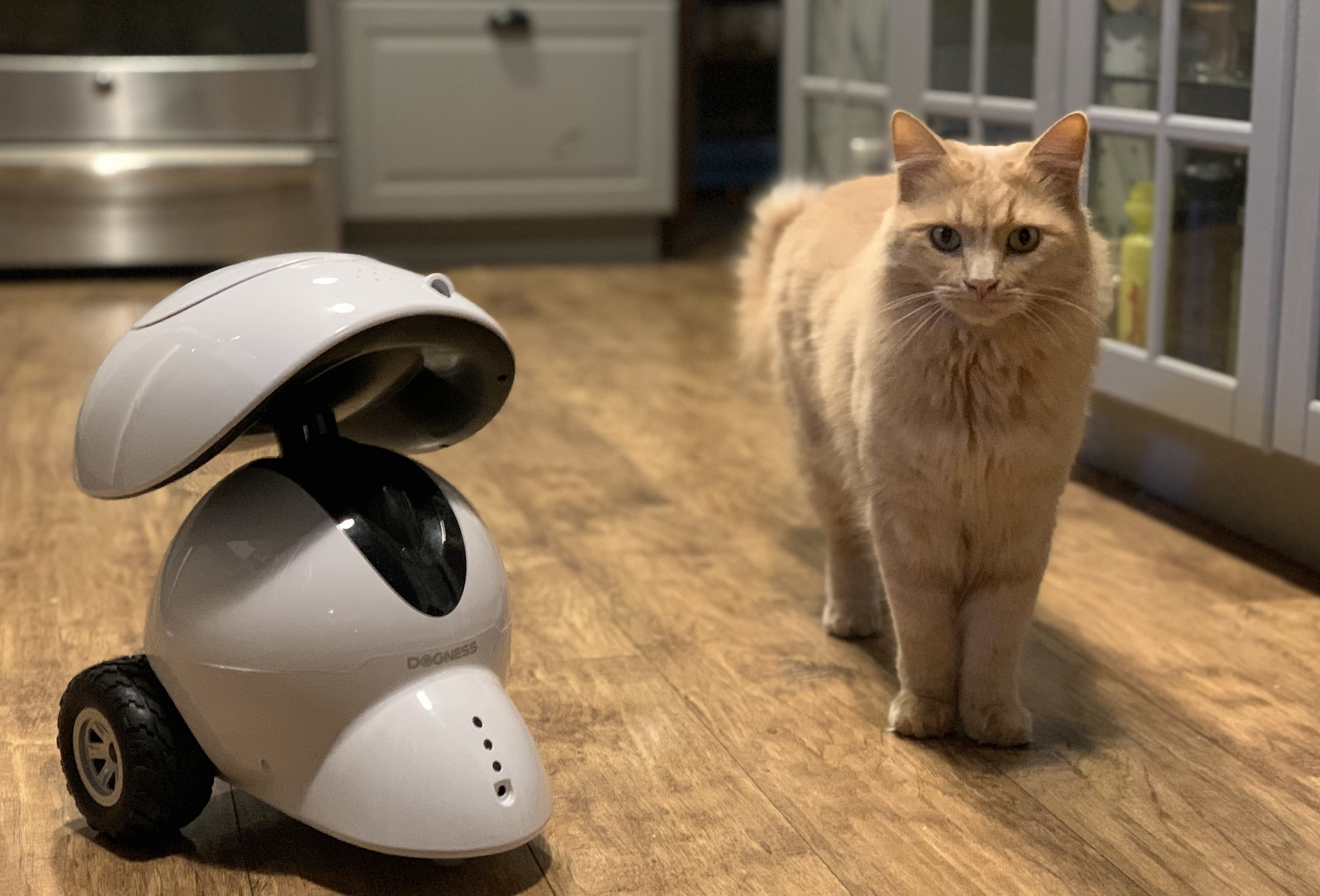 Dogness Smart Pet Robot Review