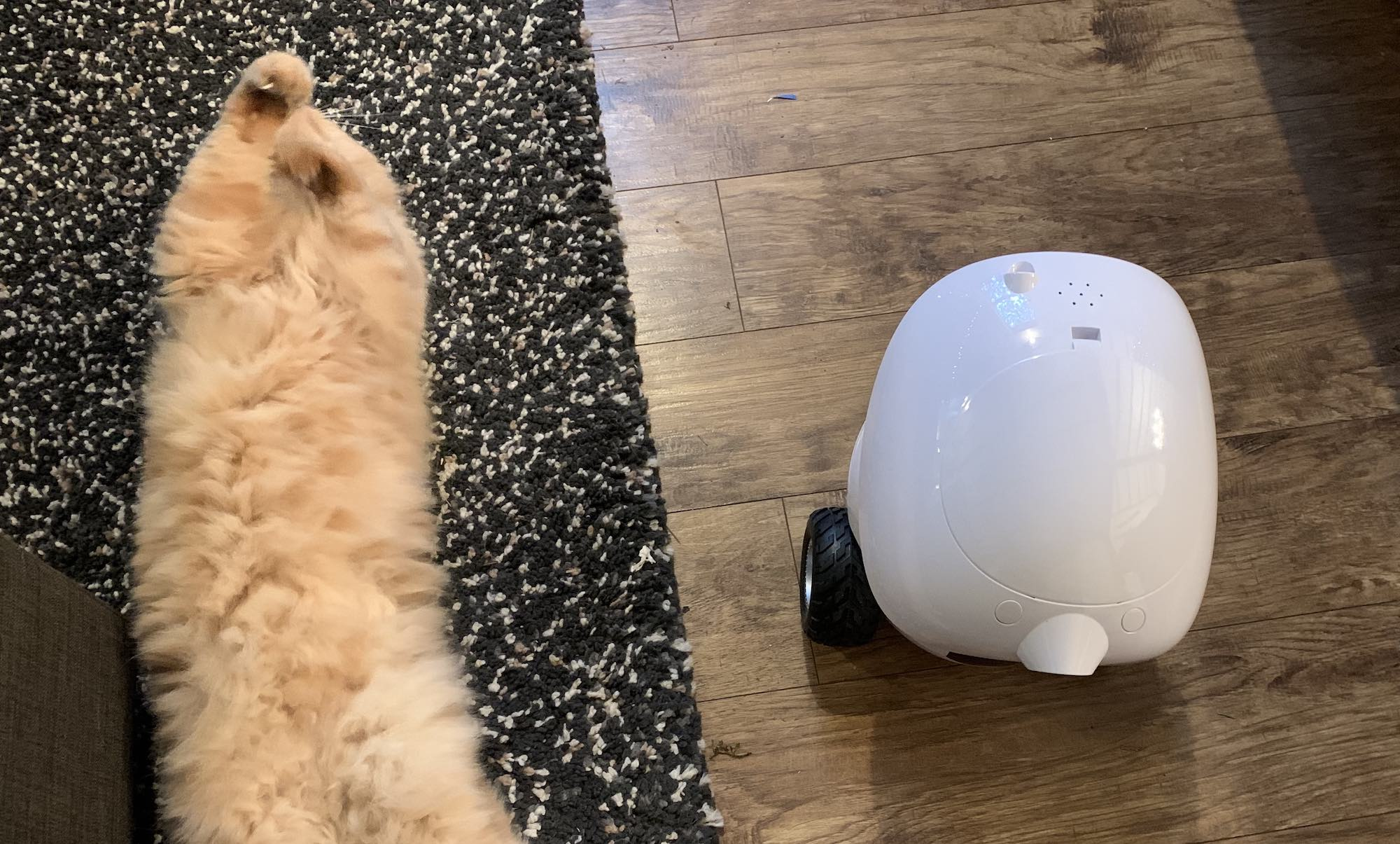 iPet Smart Robot Treat Dispenser Review