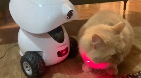 A cat sitting on a table, with the Dogness iPet Smart Robot pet treat dispenser to the cat's left; the iPet shines a red laser light on the cat as the cat looks away to the right side of the image.