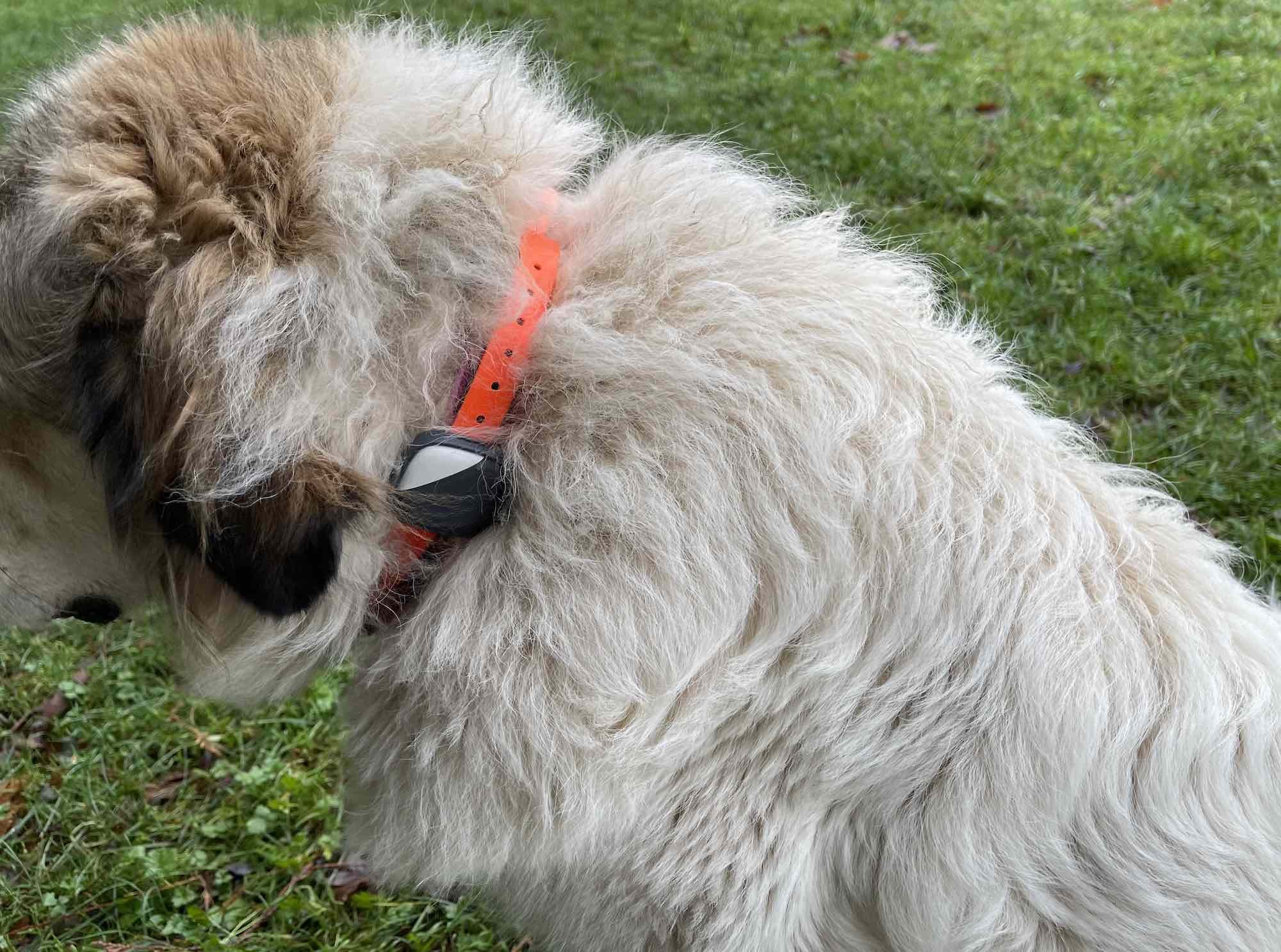 PetFon Dog Activity Tracker Review