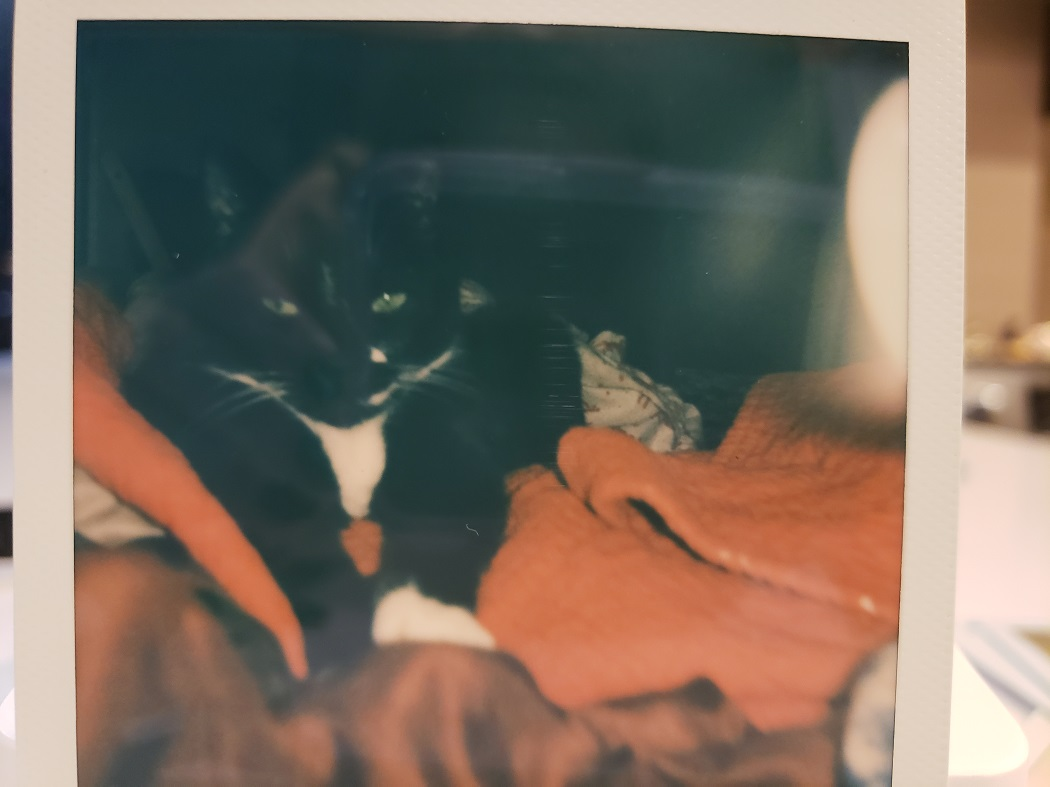 image of a Polaroid photo of a cat