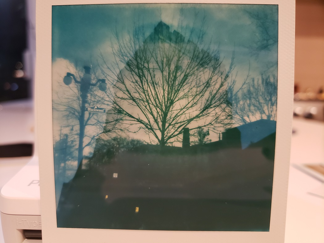 image of a double exposed Polaroid photo of a tree against a building
