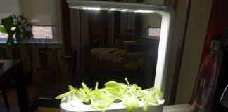 Grobo Start Smart Indoor Garden 3 weeks growth